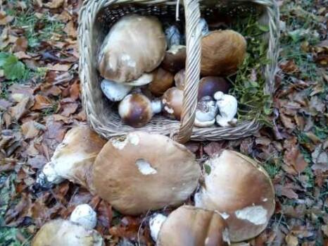 Gljivarijadi